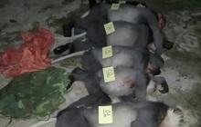 5 con voọc chà vá chân xám quý hiếm bị bắn chết