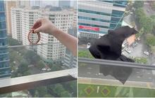 Hành động thiếu ý thức của cô gái trên chung cư cao tầng ở Hà Nội khiến netizen la ó: Lỡ rớt xuống che mặt người ta, gây tai nạn thì sao?