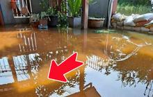 Mùa lũ nước ngập vào tận sân nhà, thanh niên lại vui như bắt được vàng, nhìn vào làn nước thì mới hiểu lý do