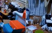 Đỉnh cao khách trọ bùng tiền: Nhà đầy phân động vật và rác rưởi, vòi nước chảy lênh láng cho thêm phần khắc nghiệt