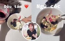 """Hari Won chính thức gia nhập """"đường đua"""" TikTok, vừa tung clip ăn đêm cho hội giảm cân liền bị fan bắt bẻ vì… sai chính tả!"""