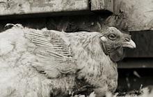 """Chùm ảnh những con vật được """"cho phép sống đến già"""" gây ám ảnh lạ kỳ: Khi các mảnh đời ngắn ngủi được """"ban tặng"""" sự sống buồn tủi"""