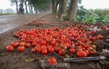 """200 tấn rau củ quả """"ế"""", người dân Hà Nội đổ ngoài đồng"""