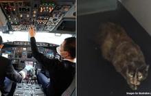 Mèo dữ tấn công cơ trưởng khiến máy bay hạ cánh khẩn cấp