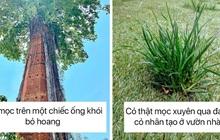 Loạt hình ảnh chứng minh khả năng sinh tồn đáng kinh ngạc của cây cối trước sự xâm chiếm của loài người