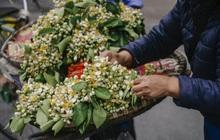 Hà Nội những ngày tháng 3: Đi ngoài đường thôi cũng thấy xao xuyến bởi hương thơm một mùa hoa mới