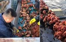 """""""Việc nhẹ lương cao"""" ở Hàn Quốc: Đứng tuốt loại sinh vật kỳ lạ ngay trên biển, nhận 50 triệu/tháng!?"""