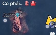 Sự thật phía sau hình ảnh bạch tuộc khổng lồ mà Google Maps chụp được đang gây xôn xao TikTok