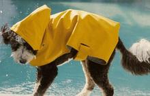 Zara ra mắt BST trang phục, phụ kiện cho chó mèo giá từ 300k - 1,4 triệu
