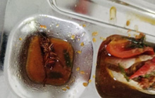 Học sinh lớp 11 ở TP.HCM phát hiện gián chết trong thức ăn: Đại diện trường học nói gì?