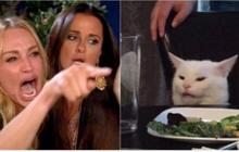 """""""Hãy là một chú mèo lịch sự"""", cụm từ leo lên top hot search Weibo nhưng... không ai hiểu gì!"""