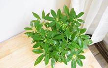 Mệnh Mộc rước lộc vào nhà với 4 loại cây cực kì dễ trồng và chăm sóc