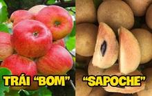"""Những loại trái cây có nhiều tên gọi lạ nhất Việt Nam, tưởng quen thuộc nhưng nghe xong đảm bảo ai cũng """"phát lú"""""""