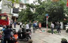 Hà Nội: Cây xanh bất ngờ bật gốc, đè trúng ô tô, người dân kịp thời tháo chạy