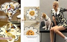 Cún cưng của Rosé lắm đồ xinh ghê: Từ đồ chơi vài trăm nghìn đến áo tiền triệu sành điệu như người
