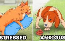 7 hành động kỳ quái của chú chó bạn nuôi và lý do đằng sau ai cũng cần biết, đặc biệt là hành động cuối cùng