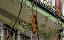 Quái vật đu trên cây khiến người dân sợ hãi không dám mở cửa mấy ngày liền, sự thật đằng sau khiến ai cũng té xỉu