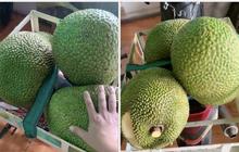 """Thu hoạch được 3 trái mít nặng gần 30kg, tới lúc đem bán chàng trai """"sốc nặng"""" khi nghe mức giá: Thà để tự ăn còn hơn!"""