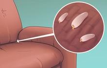 5 dấu hiệu cho thấy rệp đang làm tổ trong nhà của bạn, hãy cẩn thận