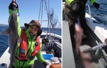 Tranh cãi việc nhà Quỳnh Trần JP ra biển câu cá mập con để ăn, cảnh máu me cũng được đưa ngay lên video