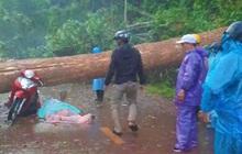 Mưa lớn kèm giông lốc quật cây rừng ngã đổ, đè 2 phụ nữ thương vong