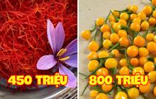 Có 3 loại gia vị đắt và hiếm nhất thế giới, Việt Nam đã trồng thành công cả 3