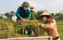 Vĩnh Phúc: Đoàn viên, công an giúp các gia đình bị cách ly y tế thu hoạch lúa chín