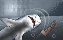 Bắt đầu từ... bãi nôn của một con cá mập, cảnh sát bất ngờ phát hiện ra vụ án mạng kỳ lạ bậc nhất lịch sử cùng cú twist không thể tin nổi