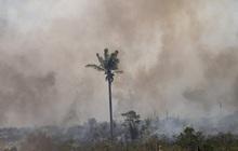 Rừng Amazon thải nhiều carbon hơn lượng khí thải hấp thụ