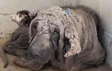 Chú chó hoang khổ sở, nhìn như sắp hoá đá khiến nhiều người há hốc ngạc nhiên với diện mạo hiện tại sau khi được cứu trợ