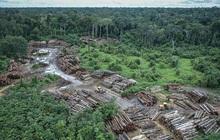 Rừng Amazon tại Brazil bị tàn phá hơn 580 km2