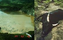 Chiếc hồ thảm sát: Chỉ sau 1 đêm mà cả nghìn người lẫn động vật xung quanh cái hồ này chết hàng loạt, chuyện gì đã xảy ra?