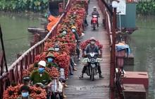 Bắc Giang: Kiếm tiền triệu từ việc đẩy xe chở vải lên dốc cầu phao trong mùa thu hoạch