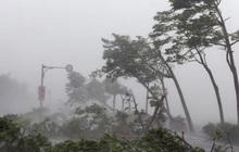 Bão số 2 giật cấp 10 đổ bộ đất liền từ Thái Bình đến Nghệ An, gây mưa dông gió giật cho khu vực Bắc Bộ