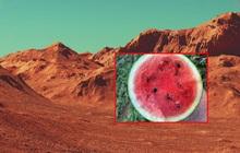 New York Times vừa xác nhận phát hiện cả một ruộng dưa hấu trên sao Hỏa và sự thật khiến nhiều người phải bật cười