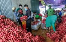 Bắc Giang đã tiêu thụ gần 110.000 tấn vải