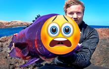 Dân tình hốt hoảng vì anh chàng câu được loài cá quá giống… ma cà rồng, hành động cuối clip được đặc biệt khen ngợi