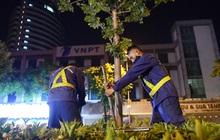 Ảnh: Di dời hàng cây phong lá đỏ trên 2 tuyến phố Hà Nội ngay trong đêm