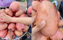 """Lần đầu thấy trái xoài màu hồng có ngoại hình """"béo núc ních"""" ở Việt Nam, thanh niên lên mạng hỏi giống gì thì bị """"doạ"""" đến xanh mặt"""