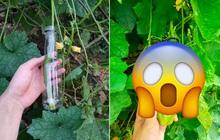 """Thử trồng mướp trong chai, tới lúc thu hoạch cả thanh niên và dân mạng đều té ngửa vì kết quả trông cứ như bị """"đột biến"""""""
