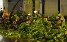 Hàng loạt cây xanh gãy đổ khắp đường phố Hà Nội sau cơn mưa giông tầm tã