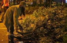 Gần 300 cây xanh ngã đổ ở Hà Nội sau trận mưa dông tối qua