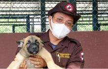 """Campuchia sẽ dùng chó """"đánh hơi"""" tìm người mắc Covid-19"""
