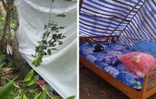 """Về quê cách ly, cô gái được ba mẹ cho """"cắm trại"""" 1 mình giữa khu vườn đầy cà phê và chôm chôm"""