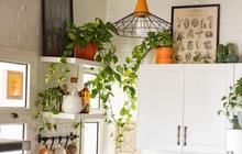 """7 loại cây xinh xắn dễ chăm nên trồng trong bếp: Cây thanh lọc không khí, cây làm gia vị cực """"đỉnh"""""""