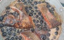 Khoe cá kho với… trân châu đường đen, cô gái bảo là món đặc sản miền Tây, netizen càng ngỡ ngàng hơn khi biết sự thật