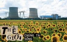 """Đồng hoa hướng dương khổng lồ mọc lên ngay cạnh nhà máy Fukushima sau thảm họa hạt nhân """"chết chóc nhất lịch sử"""": Chuyện bí ẩn gì đây?"""