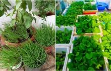 Dân mạng mở hội khoe vườn mini xanh mướt cải thiện bữa ăn: Khỏi đòi về quê trồng rau, nuôi cá nữa nhé!
