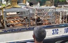 Phát hiện 16 con hổ được nuôi nhốt trong nhà dân