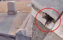 """Đến thăm nghĩa trang, người đàn ông """"dựng tóc gáy"""" với vật thể thò ra từ vết nứt ngôi mộ, càng nhìn càng không hiểu nổi"""